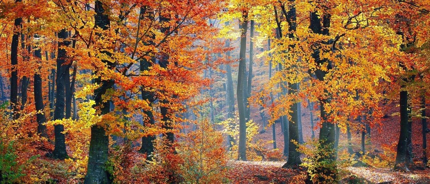 Herbsturlaub in Berchtesgaden – Urlaub im Herbst im Berchtesgadener Land – Stoll's Hotel Alpina