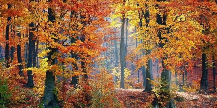 Herbsturlaub