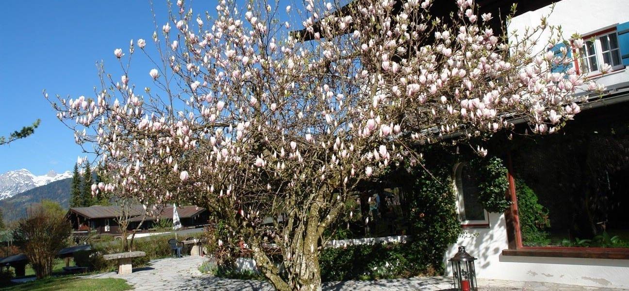 Urlaub im Frühjahr in Stoll's Hotel Alpina in Berchtesgaden / Schönau am Königssee